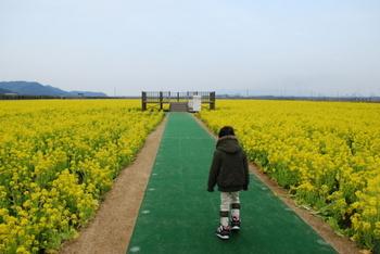 笠岡菜の花畑2.JPG