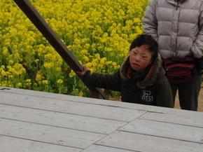 笠岡菜の花畑3.JPG